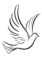 Allontanamento e pulizia piccioni Roma
